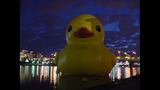 Quack Quack! WPXI viewers pose for pics with… - (14/25)