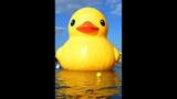Quack Quack! WPXI viewers pose for pics with… - (15/25)