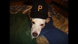 Pirates fans show their spirit (viewer submitted) - (10/25)