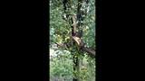 Photos: Overnight storm knocks down trees,… - (20/24)