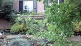 Photos: Overnight storm knocks down trees,… - (15/24)