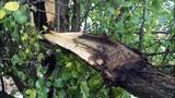Photos: Overnight storm knocks down trees,… - (24/24)