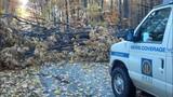 Photos: Overnight storm knocks down trees,… - (13/24)