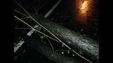 Photos: Overnight storm knocks down trees,… - (8/24)