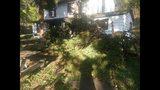 Photos: Overnight storm knocks down trees,… - (4/24)