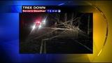 Photos: Overnight storm knocks down trees,… - (5/24)
