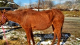 Photos: Horse found wandering in Derry Twp. - (2/3)