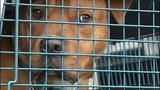 Animal Friends rescues dogs, cats scheduled… - (14/15)