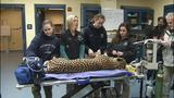 4 new cheetahs get check-ups at Pittsburgh… - (12/13)