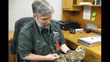 Photos: Endangered owl appears at Pittsburgh… - (5/5)