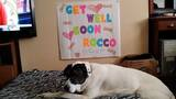Get well, Rocco! Pets from near, far send… - (10/25)