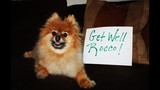 Get well, Rocco! Pets from near, far send… - (14/25)