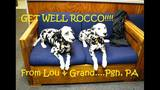 Get well, Rocco! Pets from near, far send… - (12/25)