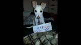 RIP Rocco: Pets pose for condolence photos… - (6/25)