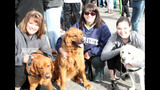 Thousands attend 2014 Highmark Walk - (3/25)