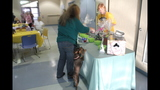 Animal Friends hosts dog-friendly