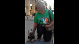 Hundreds of dogs walk in Pittsburgh Pup Crawl - (6/21)