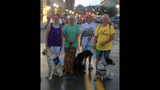Hundreds of dogs walk in Pittsburgh Pup Crawl - (11/21)