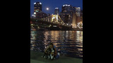 Hundreds of dogs walk in Pittsburgh Pup Crawl - (14/21)