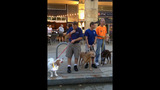Hundreds of dogs walk in Pittsburgh Pup Crawl - (8/21)
