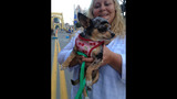 Hundreds of dogs walk in Pittsburgh Pup Crawl - (9/21)