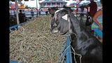Washington County Fair underway - (2/25)