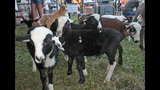 Washington County Fair underway - (15/25)