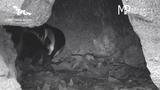 1 of 2 penguin chicks hatch_6542890