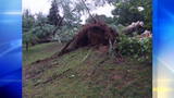 McCandless tree_7465339