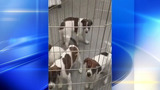 Puppies brought to Pittsburgh from Mississippi_8638735