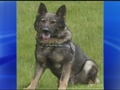 Police continue investigation into stabbing death of K9 officer_20160201112954