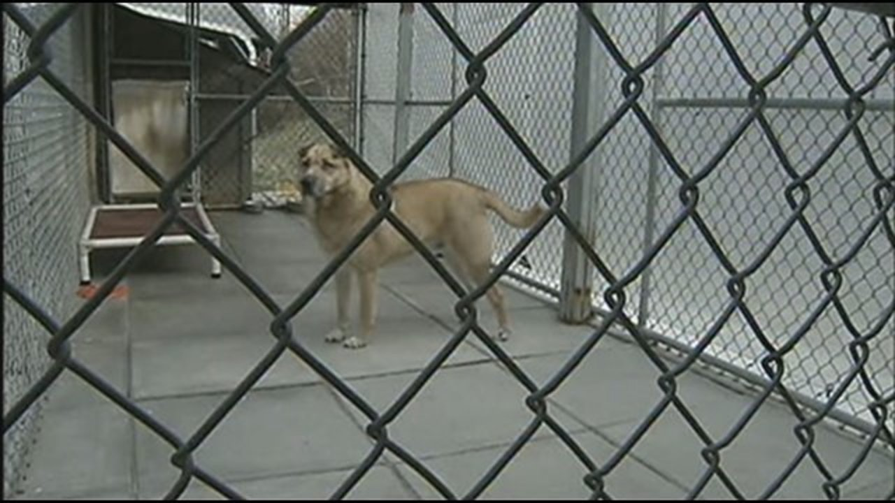 State law cracking down on pet owners who leave dogs out in
