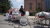 Horse-drawn carriage carries Knoxville shooting victim, 6, to final…
