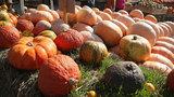 Photos: Local Pumpkin Patches