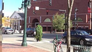 Man dressed as tree arrested for blocking traffic