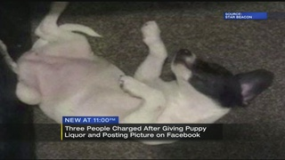 Puppy given alcohol leads to charges for 3 Ohio residents