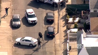 RAW: Cow leads chase through Queens, New York