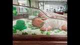 Photos: St. Patrick's Day Babies - (6/15)