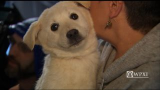 Photos: Dogs rescued from South Korea arrive in Pittsburgh