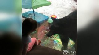 Little girls faceoff with bear