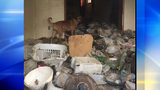 PHOTOS: Animals, adults living in deplorable… - (1/4)