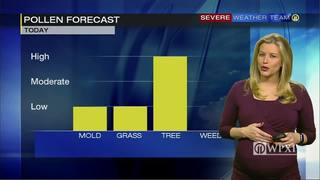 Pollen forecast for Monday (4/24/17)