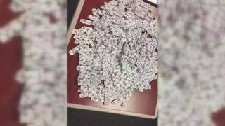 VIDEO: Evidence seized during drug round-up