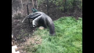 PHOTOS: Jungle Odyssey exhibit at Pittsburgh Zoo & PPG Aquarium