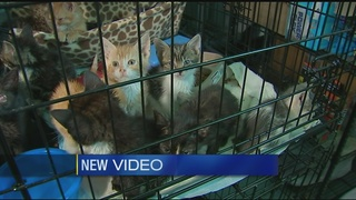 Dozens of kittens near death found abandoned