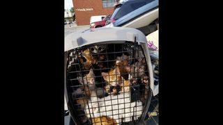PHOTOS: Dozens of kittens near death found abandoned
