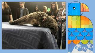 Poppy the Binturong Visits WPXI