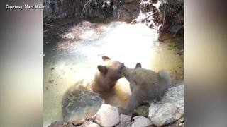 VIDEO: Mama bear and her cub take a dip in a cool spring