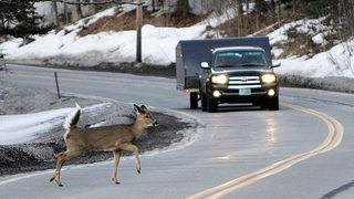 Oregon the next state to allow roadkill to be harvested for food