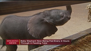 Zoo officials: Baby elephant has taken a